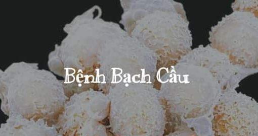benh bach cau