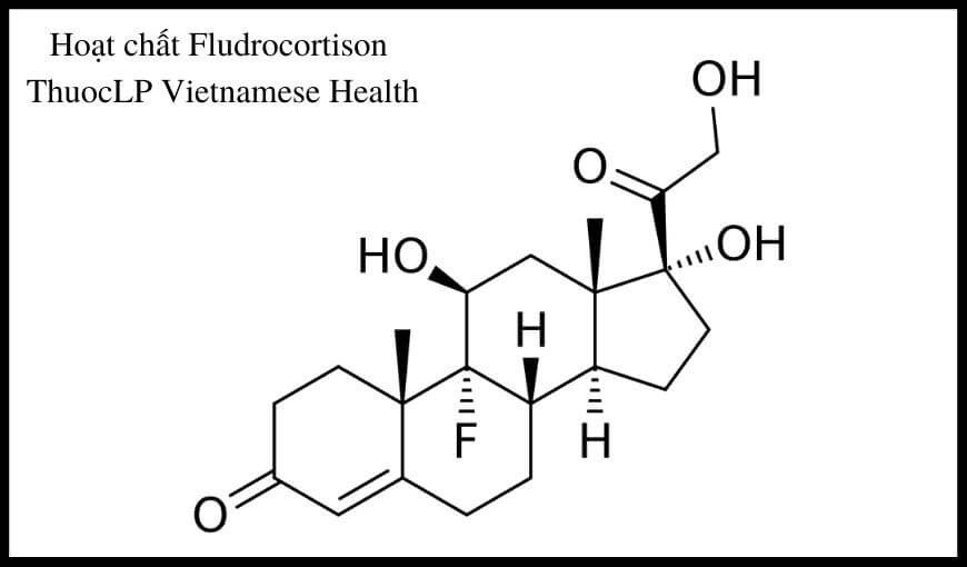 hoat-chat-fludrocortison-chi-dinh-tuong-tac-thuoc